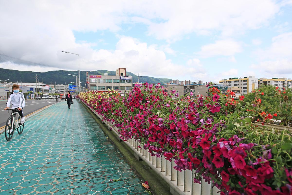 [포토] 한내대교 등 주요 다리에 꽃다리 설치
