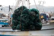 보령산 키조개 일본 수출량 최근 4년간 6배로 대폭 증가